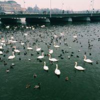 sitting ducks at the lake